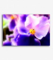 Flor morada _G.164