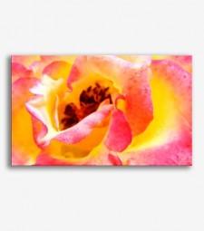 Flor rosa y amarilla _G.181