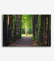 Bosque de árboles _G358