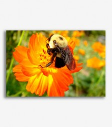 Abeja en flor  _G689