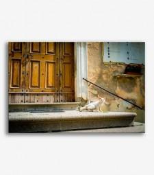Portón y gato  _G734