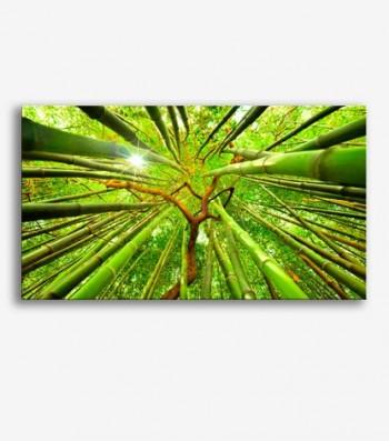 Cañas de bambú _G748