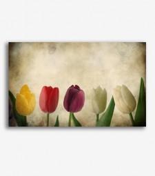 Tulipanes vintage  _G823