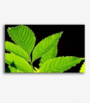 Planta hojas verdes _G.110