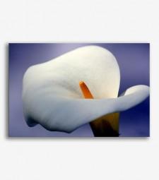 Flor blanca _G.116