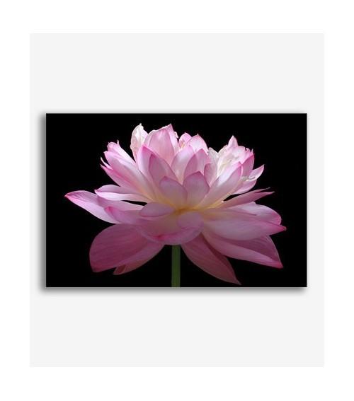 Flor rosa _G.156