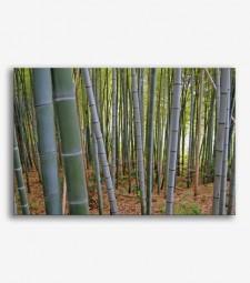Bosque bambú _G204