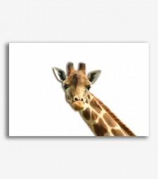 Girafa _G257
