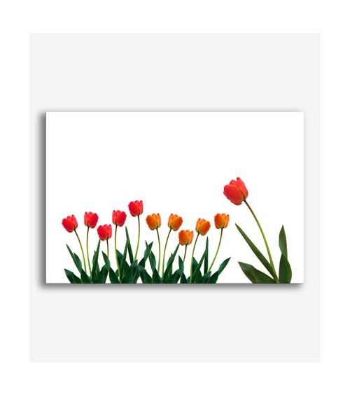 Tulipanes rojos _G273