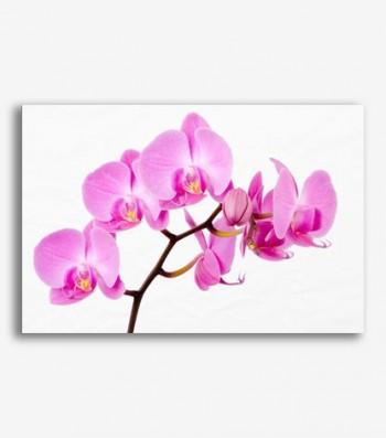 Orquideas _G275