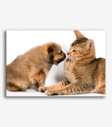 Perro y gato  _G283