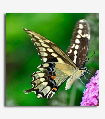 Mariposa en flor_G401
