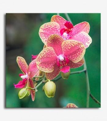Orquideas rosas_G501