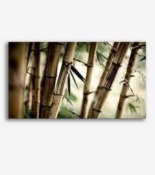 Cañas bambú _G484