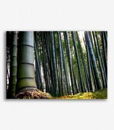 Bambú _G525