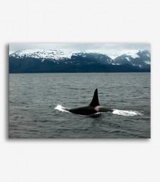 Aleta de la ballena  _G551