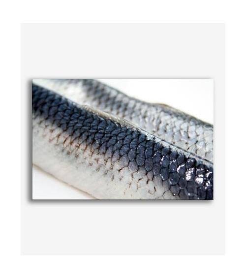 Pescado  _G559