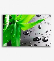 Bambú con gotas de agua _G594