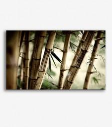 Cañas de bambú _G599