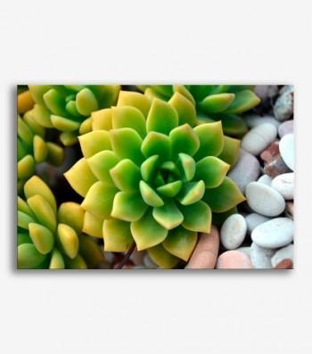 Flor planta _G615