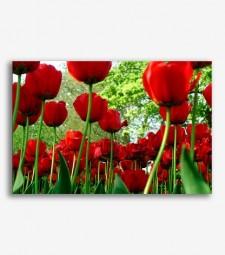 Tulipanes rojos _G630