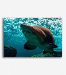Tiburón  _G631