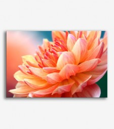 Flor coral  _G639