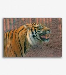 Tigre furioso  _G640