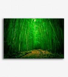 Paisaje cañas de bambú _G674