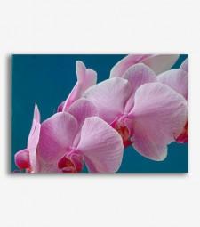 Orquideas  _G688