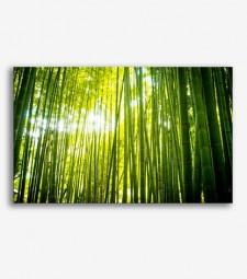 Bambú _G741