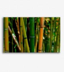 Cañas de bambú _G750