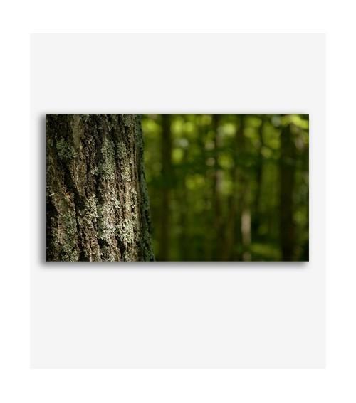 Árbol en el bosque _G812