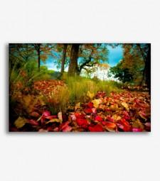 Campo en otoño  _G816