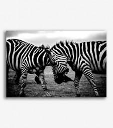 Cebras blanco y negro _G1031
