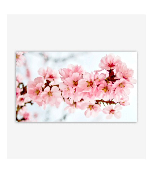 Flores almendro rosa