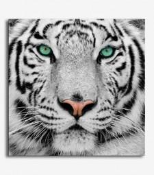 Tigre _2.11