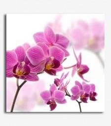 Orquideas _5.12