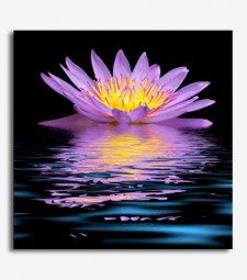 Flores agua_5.18