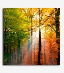 Paisaje árboles_6.11