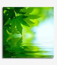 Paisaje hojas agua_6.25