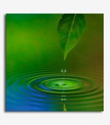 Paisaje hojas agua 2_6.26