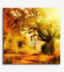 Árbol otoño_6.37