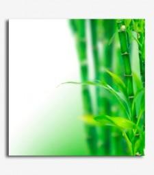 Cañas bambú_6.53