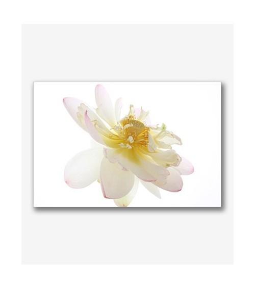 Flor blanca _G.7