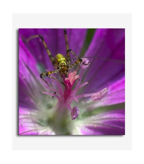Flor malva e insecto