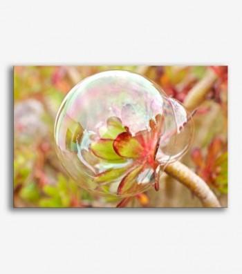 Flor burbuja _G.99