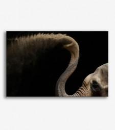 Elefante   _G.104