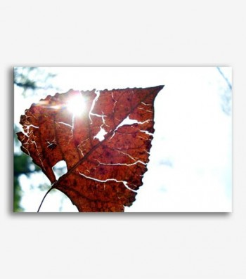 Hoja otoño _G.108
