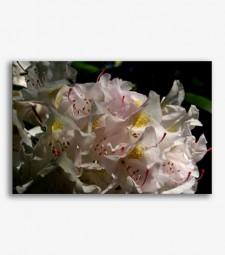 Flores blancas _G.125